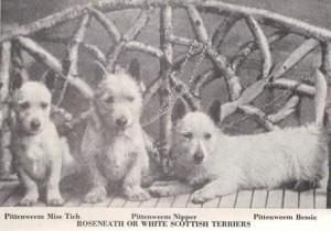 Scotties White von 1899