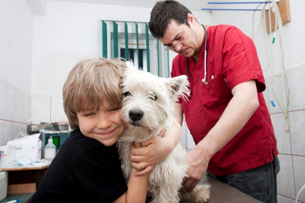 Westie Tierarzt