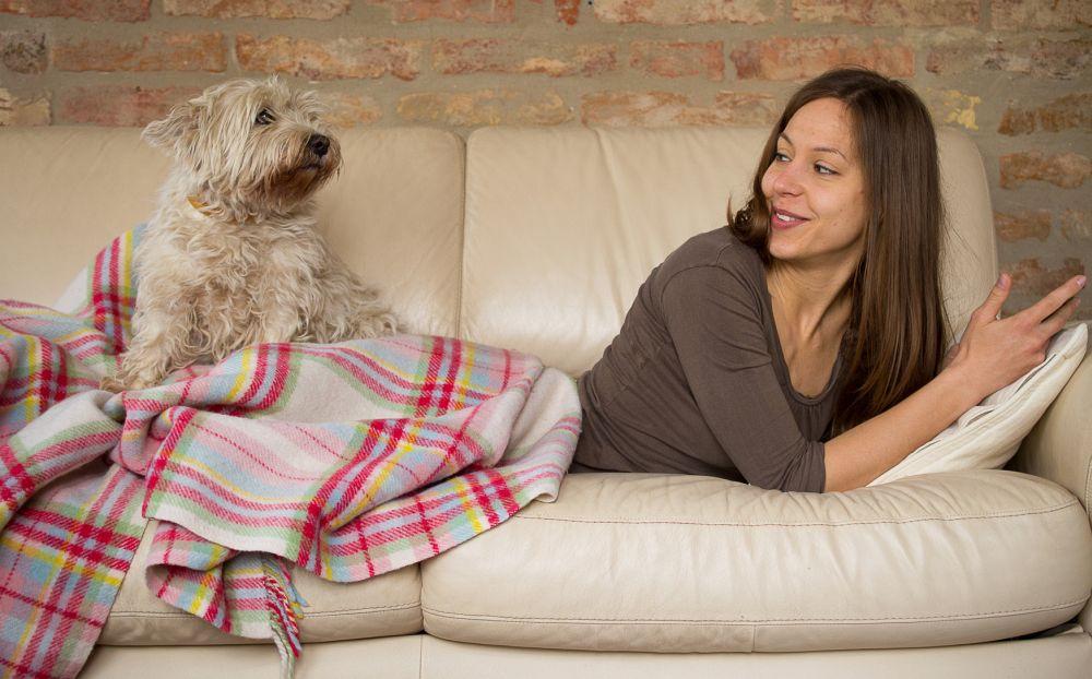 Westie auf dem Sofa