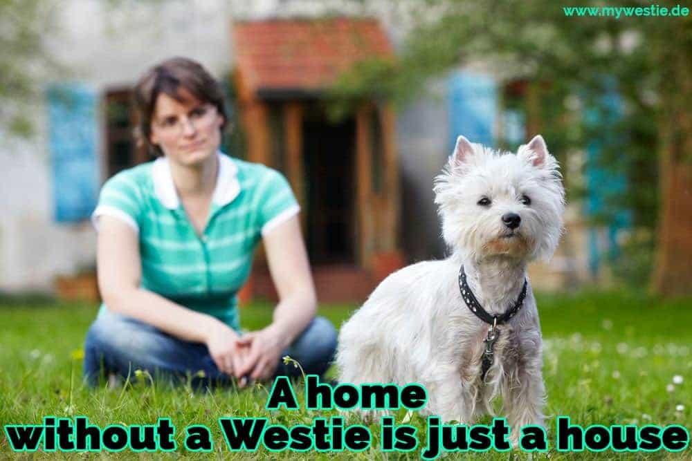 Eine Frau sitzt auf dem Gras mit ihrem Westie